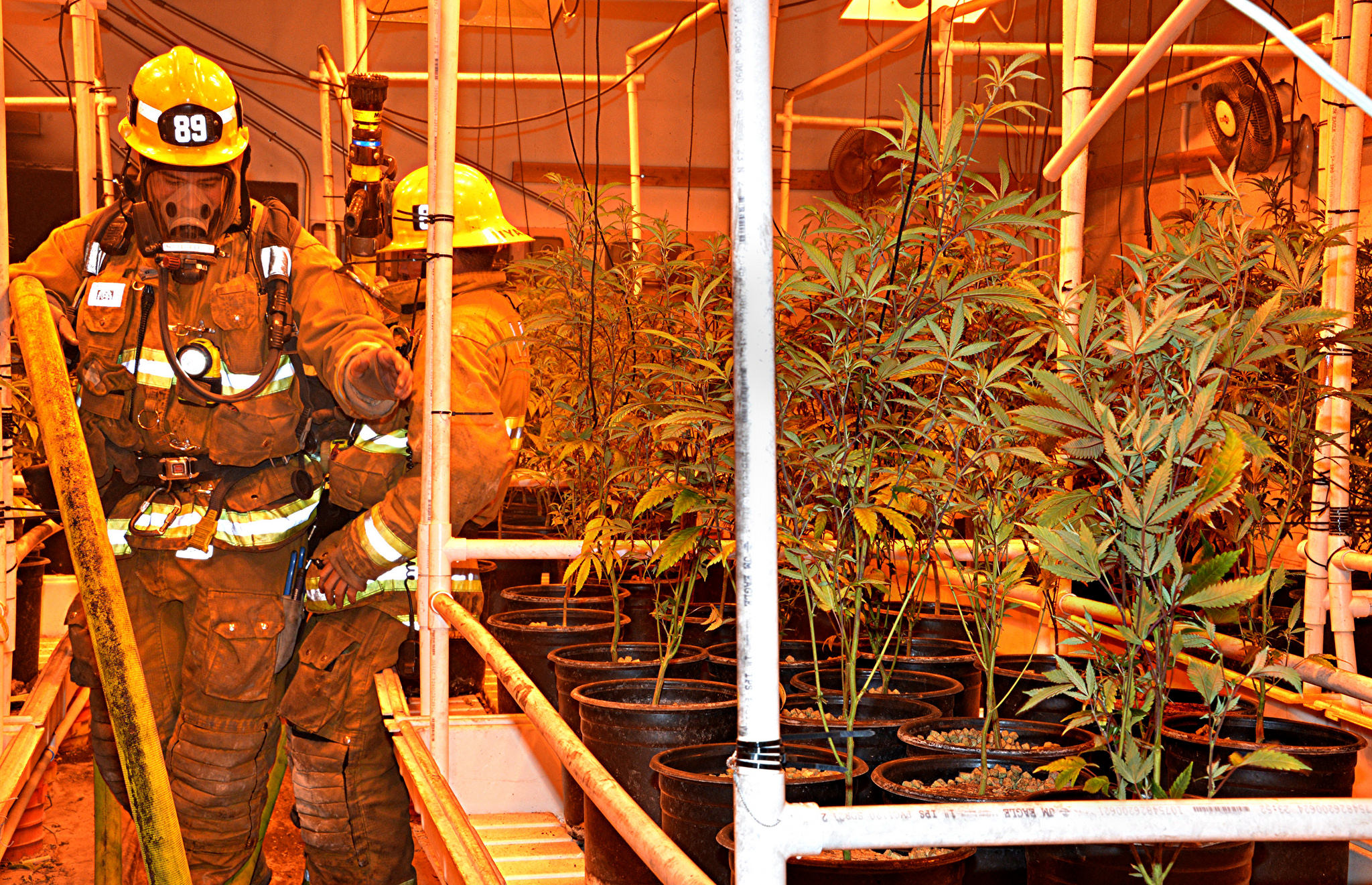 LAFD inspects grow operation