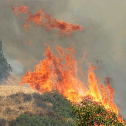 A large brush fire