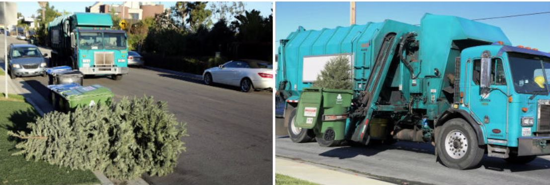 Image on left shows christmas tree sitting by recylce bin on the right a trash truck is collecting christmas tree