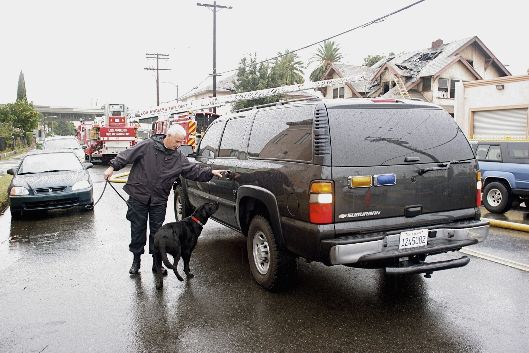 Major standing in the rain next to a black fire department Chevy Suburban, patiently waiting as his handler reaches for the rear driver-side door handle. LAFD fire truck and engine can be seen in the background in front of a 2-story home with fire damage.