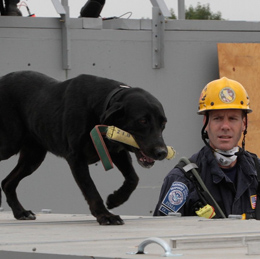 K9 unit training new dog